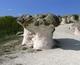 каменни гъби, stone-mushrooms, Rhodopes moutains
